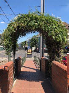 Grün bewachsener Zugang zur Haltestelle