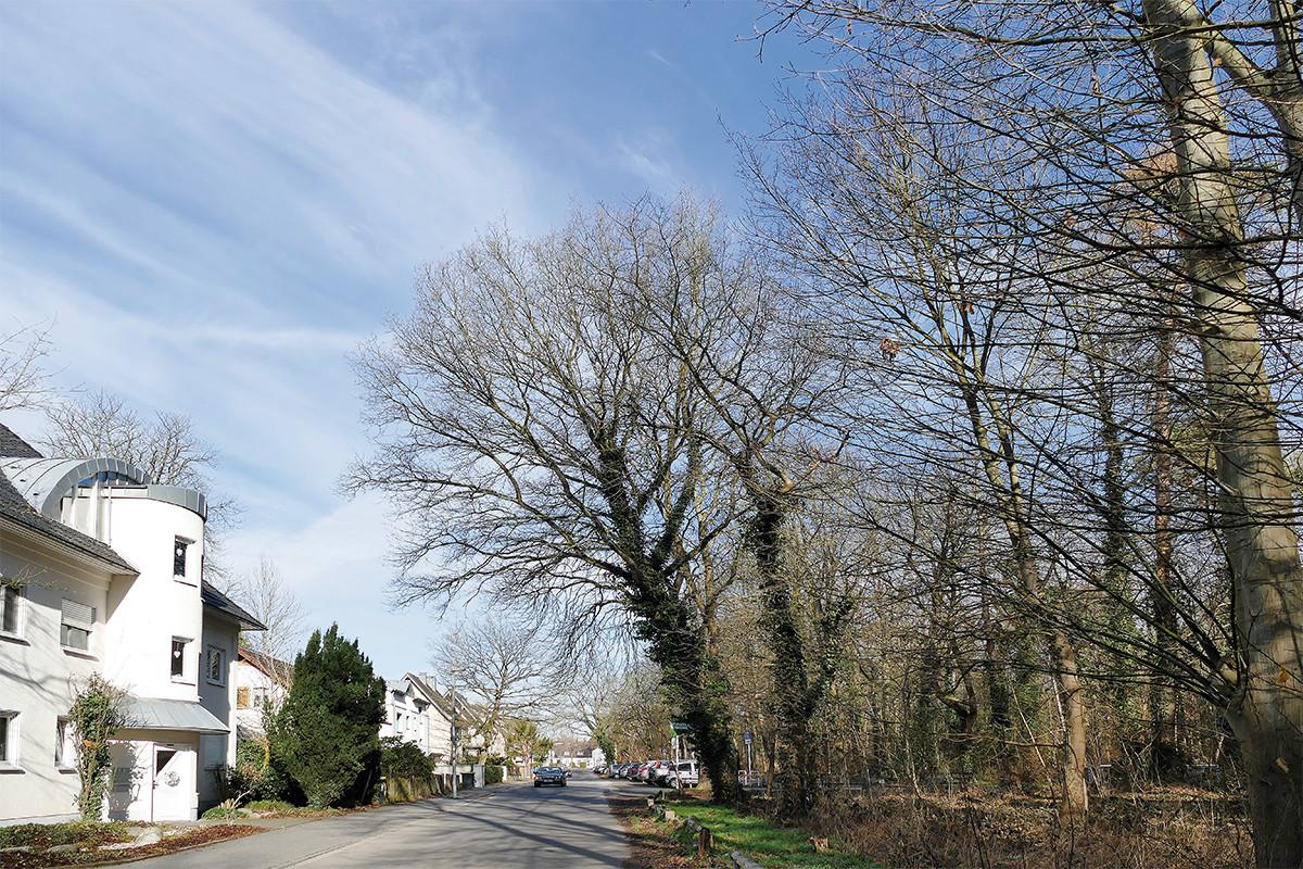 Bild einer Straße in ruhigem Wohngebiet mit Waldstück